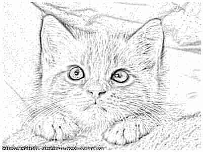 Mes dessins numeriques - Un dessin de chat ...