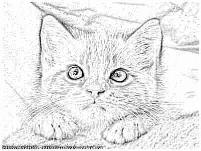 dessin de chat - Dessin De Chaton Trop Mignon 2