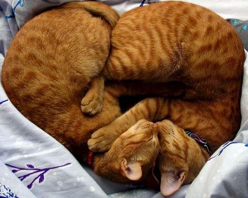 chats câlins